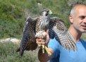 El responsable del Centre explicant les característiques del falcó
