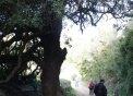 La mata catalogada com a arbre singular