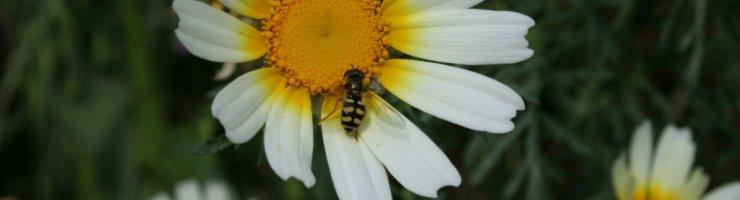 Els pesticides persistents provoquen efectes secundaris