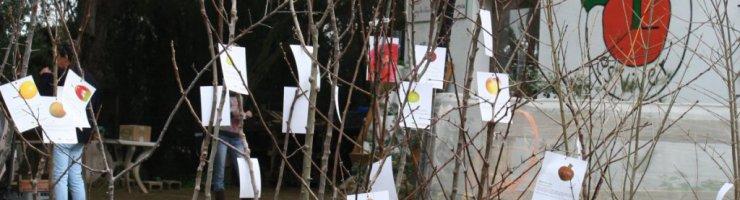 Arbres de fruita i planters ecològics al Viver del GOB