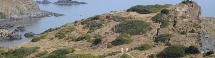 A la costa de tramuntana hi trobam molts dels tresors florístics de Menorca