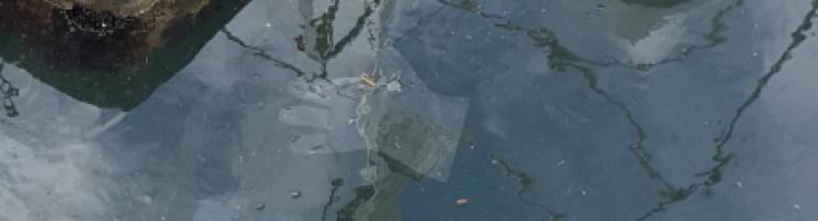 Guant de plàstic al port de Maó