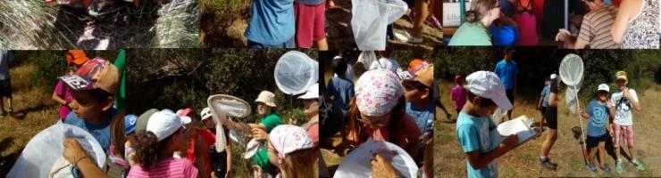 Aprenent la metodologia de censar papallones diürnes