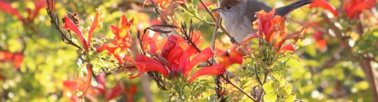 Femella de busqueret de capell. Tons marronosos i no negres. li encanten les flors.