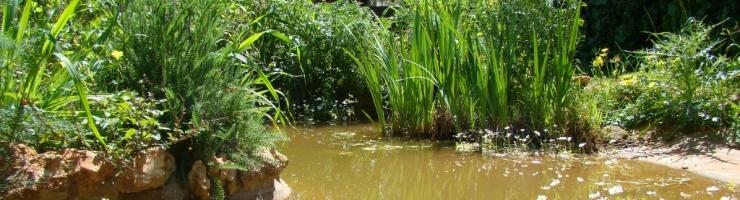 La bassa de l'Hospital d'animals