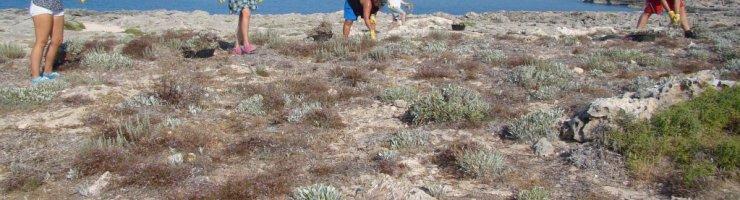 Voluntaris del GOB actuant en una zona costanera eradicant planta invasora aquest estiu