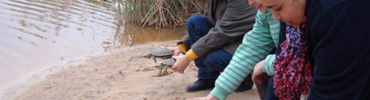 Alliberant quatre tortugues d'aigua recuperades al Centre.