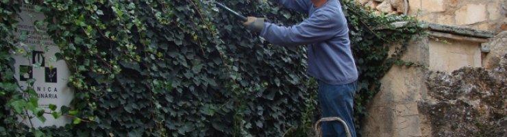 Retallant vegetació gàbies