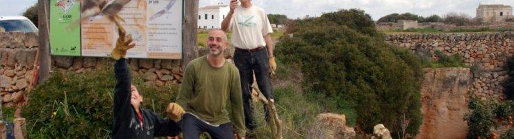 Voluntaris amollant un animal silvestre recuperat