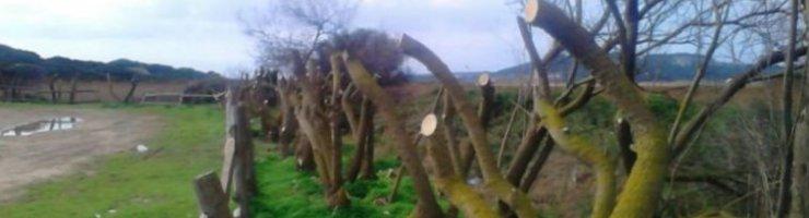 Els tamarells actuaven de pantalla visual per a la fauna del prat