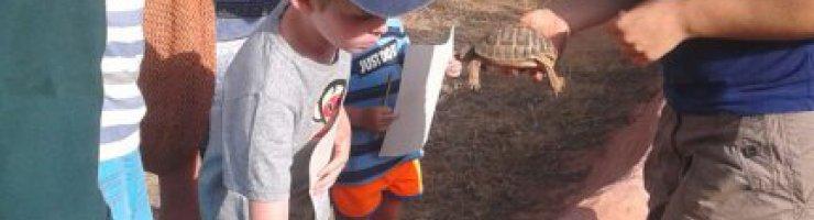 Aprenent coses sobre les tortugues