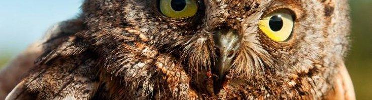 Un del animals salvats al Centre de Recuperació de Fauna Silvestre de Menorca