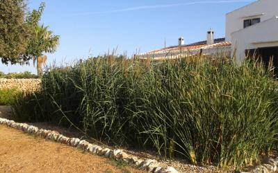 Depuració d'aigües amb filtres verds
