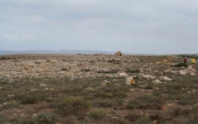 Comunitats de socarrells i marina litoral