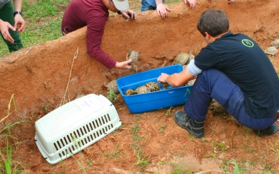 Recepcionant 54 tortugues incautades pel SEPRONA