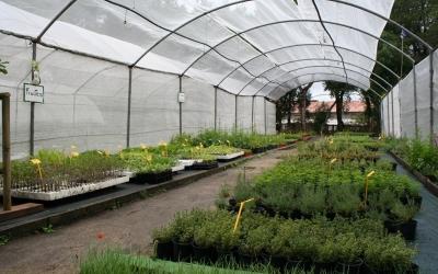 A Es Viver trobareu una àmplia oferta de planters ecològics de varietats locals d'horta