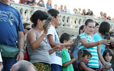 Alliberament de mussols a El Toro el passat mes d'agost