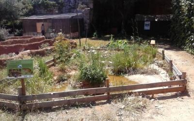 La bassa de calàpets de l'hospital d'animals