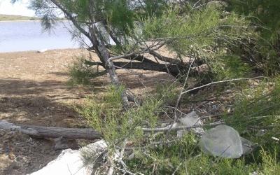 Plàstics entre la vegetació litoral