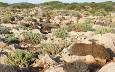 Aspecte de la vegetació, amb moltes plantes particulars
