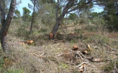 Molta rama tallada (combustible) que no deu donar prou rendiment