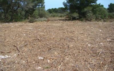 Tota la zona és plena de trossets de rama, amb un gran perill d'incendi