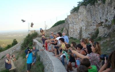 Alliberament d'uns mussols recuperats per un grup de voluntaris