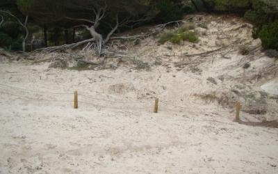 L'excessiva pressió humana de l'estiu elimina plantes dunars i provoca erosió.
