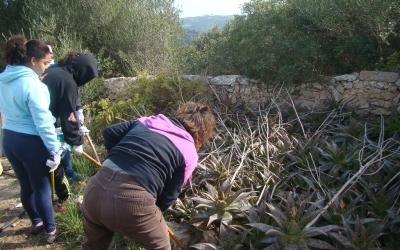 Retirant plantes crasses