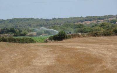 Finca de Ses Angoixes, a la una del migdia del mes d'agost