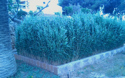 Els filtres verds poden integrar-se en els jardins