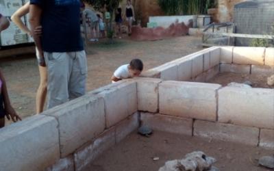 El tancat de tortugues mediterrànies. A punt de tornar a la llibertat.