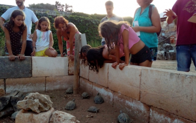 Visita el tancat de tortugues mediterrànies del Centre