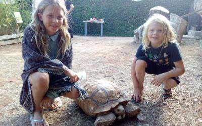 Al Centre també hi tenim altres tortugues, algunes d'exòtiques, aprèn sobre la seva història