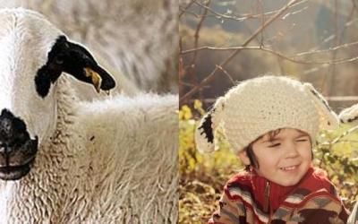 L'ovella xisqueta i unes meravelles.
