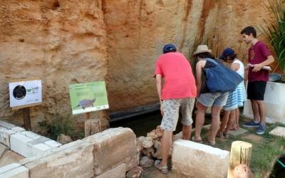 La bassa de les tortugues d'aigua