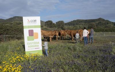 Races autòctones, pasturatge dirigit i autosuficiència en l'alimentació del bestiar. Elements claus per reduir la petjada ecològica de la producció de carn.