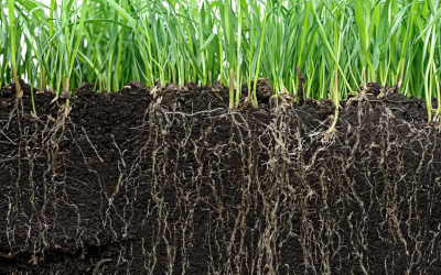 La biologia sota el sòl és molt important