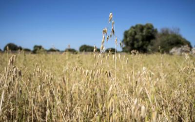 Seminari d'Agricultura i Medi Ambient