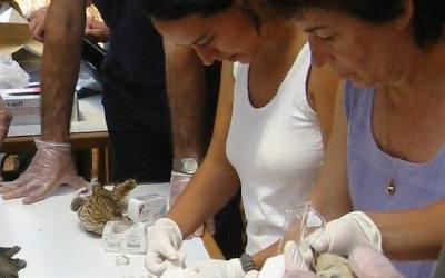 Curs de maneig de fauna dirigit als voluntaris